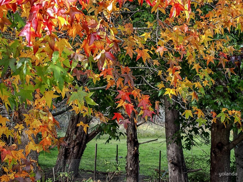 Autumn in Berrima by yolanda