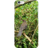 Brown Bird in Quito iPhone Case/Skin