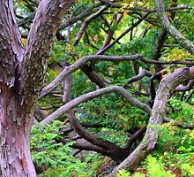 Tree Tangle by Cecilia Carr