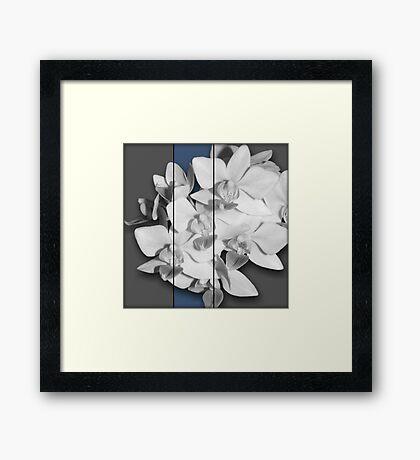 A little Blue, Orchid Photography Art Framed Print