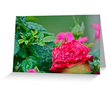 Wet rose 2 Greeting Card