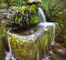 Compton Abdale Crocodile Spring by Angie Latham