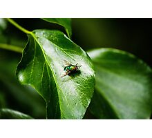 Fly on leaf Photographic Print