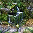 Compton Abdale Crocodile Spring 2 by Angie Latham