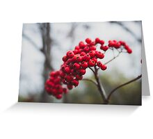 Dolly Sods Foliage  Greeting Card