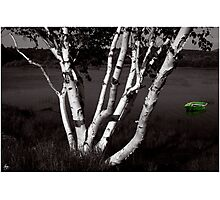 The Birch and the Green Dingy Photographic Print