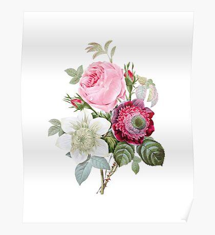 Rose Floral Botanical Poster