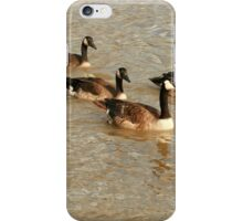 Flock of Geese Swimming iPhone Case/Skin