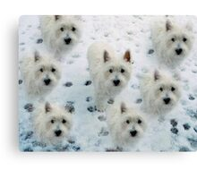 CUTE WESTIES WEST HIGHLAND WHITE TERRIERS BIRTHDAY CHRISTMAS Canvas Print