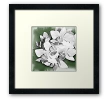 A bit of Green, Orchid Photography Art Framed Print