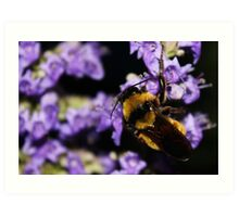 Bumble Bee At Dusk Art Print
