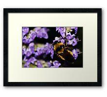 Bumble Bee At Dusk Framed Print