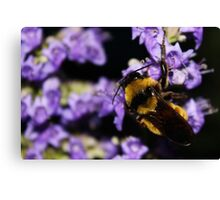 Bumble Bee At Dusk Canvas Print