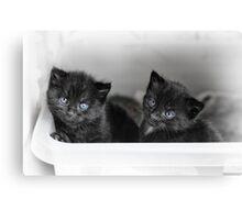 Tiny Kittens Canvas Print