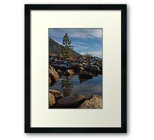 Tree at Hidden Beach Framed Print
