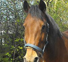 Bay Horse by Jollyrobin