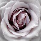 dusky rose  by Floralynne