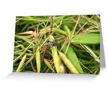 Black Fly on a Leaf Greeting Card