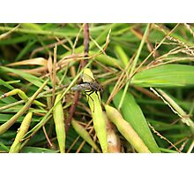 Black Fly on a Leaf Photographic Print