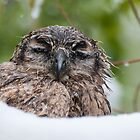 Wet Owl by Eivor Kuchta