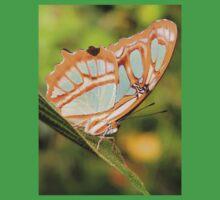 Malachite Butterfly (Siproeta stelenes) Baby Tee