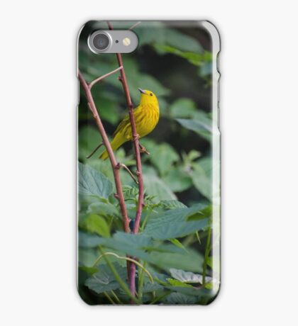 Warbler iPhone Case/Skin