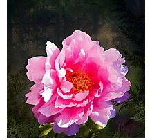 Morning Light, a mossy forest and a bright peony flower, landscape Photographic Print