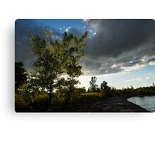 Cottonwood Tree Dramatic Light Canvas Print