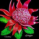 Waratah  by © Linda Callaghan