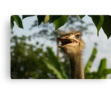 A Portrait Of An Opinionated Ostrich  Canvas Print