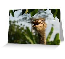 A Portrait Of An Opinionated Ostrich  Greeting Card