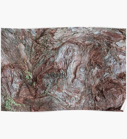 Bark abstraction Poster