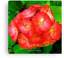 Red and Yellow Heart Flowers by Jeronimo Rubio Photography 2016 Canvas Print