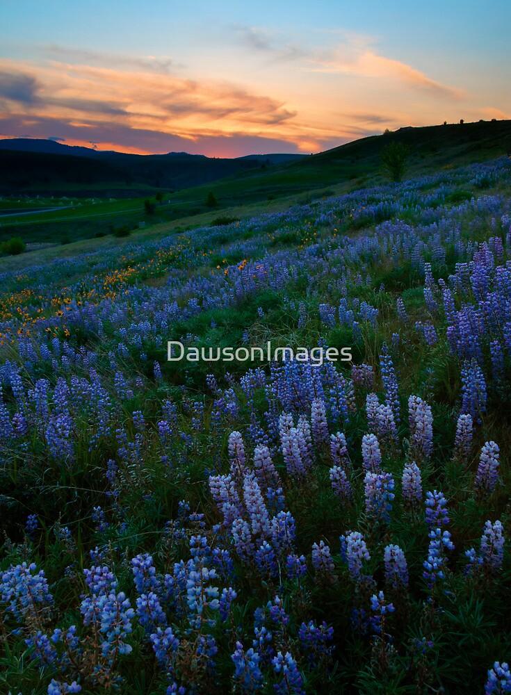 Kittitas Valley Spring by DawsonImages