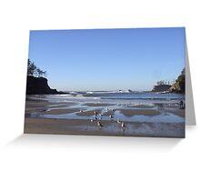 Sunset Bay Seagulls Greeting Card
