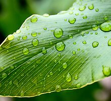 Dew drops on Leaf  by BenClarkImagery
