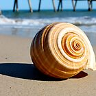 Shell on Beach  by BenClarkImagery