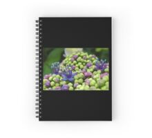 Bright and pretty hydrangea buds in Springtime Spiral Notebook