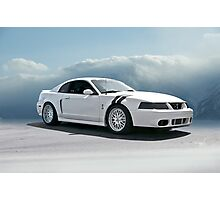 2004 Shelby Mustang Cobra Photographic Print