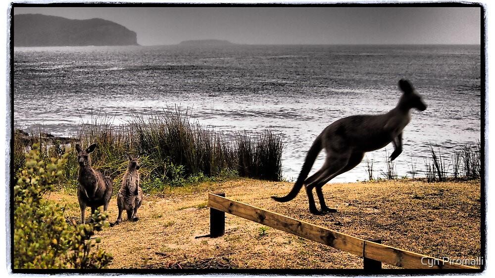 Curious Kangaroos by Cyn Piromalli