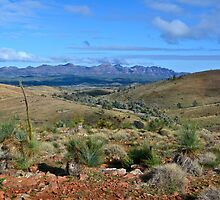 Flinders Ranges with Wilpena Pound in the background by Ian Berry