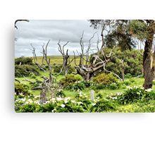Patch of Lillies Canvas Print