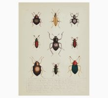 Aid to the identification of insects Charles Owen Waterhouse 1890 V1 V2 157 Various One Piece - Short Sleeve