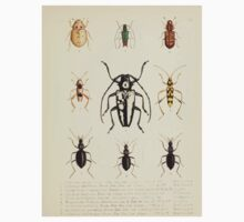 Aid to the identification of insects Charles Owen Waterhouse 1890 V1 V2 148 Various One Piece - Short Sleeve