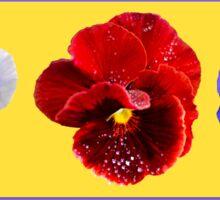 Pansy Trio Sticker