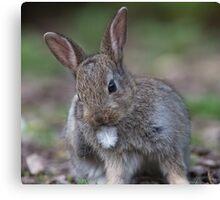 Cute bunny rabbit Canvas Print