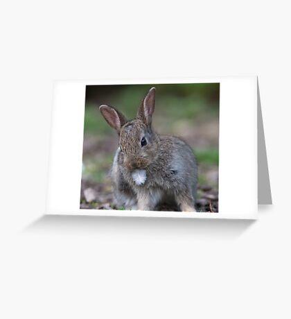 Cute bunny rabbit Greeting Card