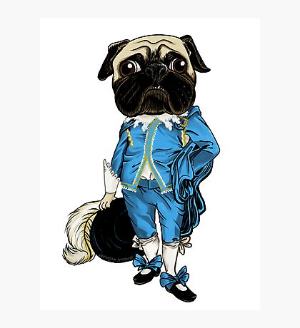 Pug Blueboy Photographic Print