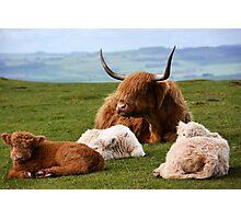 highland cows Photographic Print