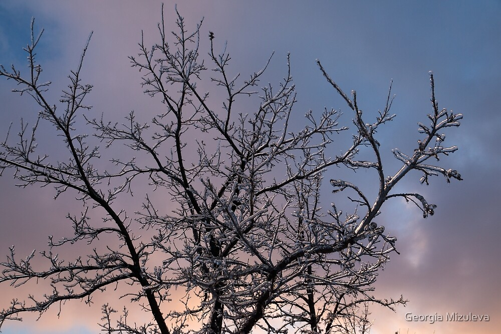 Ice Storm 2013 -  Icy Branches Sunset by Georgia Mizuleva